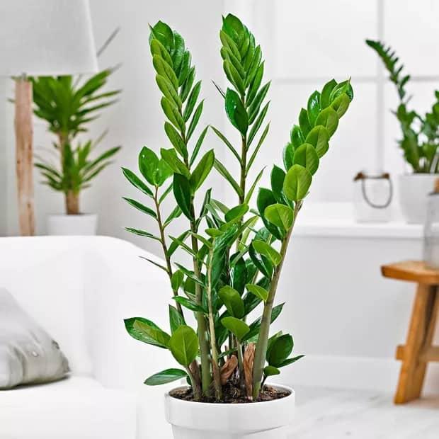 planta facil de cuidar e de sombra