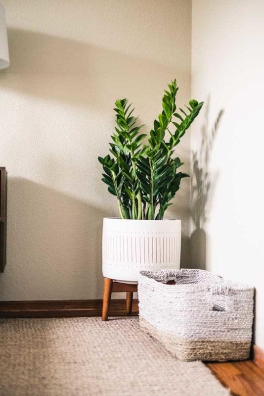 decoracao com planta facil de cuidar