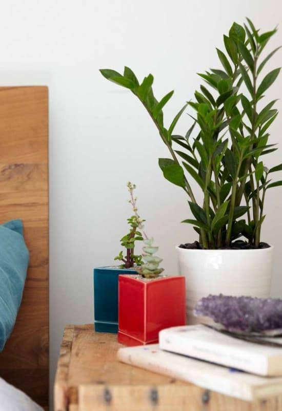 planta facil de cuidar zamioculca