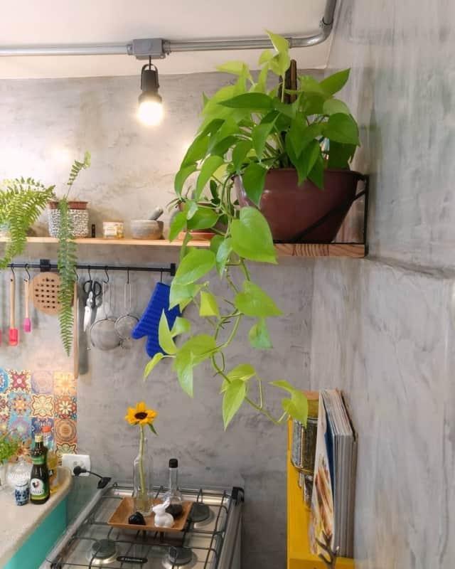 decoracao de cozinha com planta jiboia