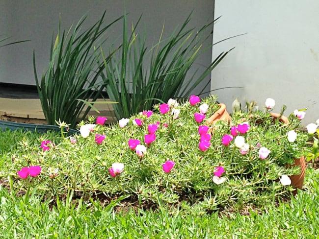 jardim decorado com onze horas