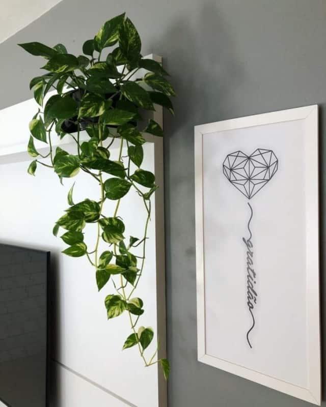 como usar planta jiboia dentro de casa