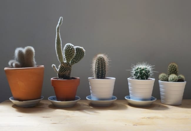 plantas pequenas e que gostam de sol