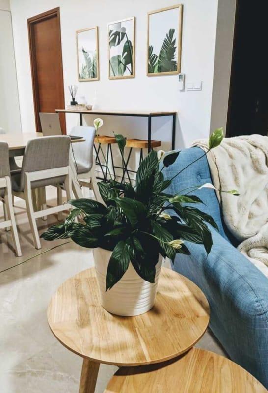 decoracao com lirio da paz dentro de casa