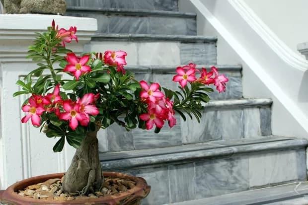planta que gosta de sol com flor