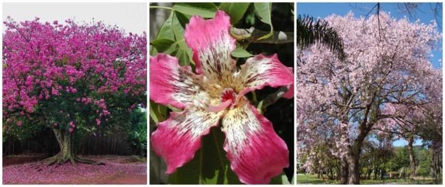 flor de paineira