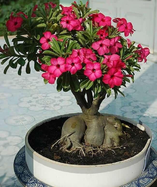 planta com flor que gosta de sol