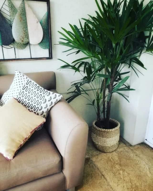 decoracao da sala com palmeira rafis