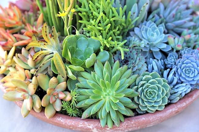 plantas faceis de cuidar e que gostam de sol