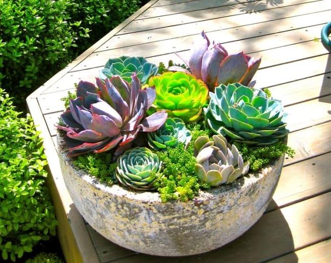 plantas de vaso que gostam de sol