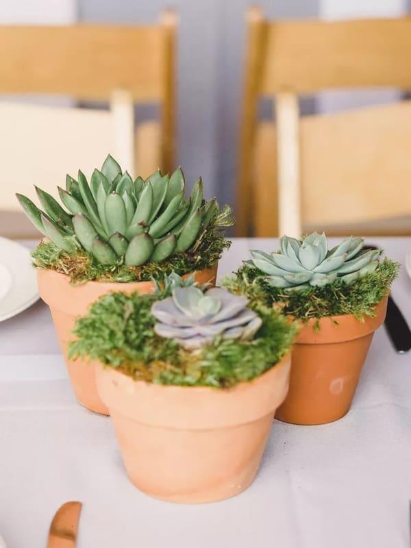 planta pequena de vaso que gosta de sol