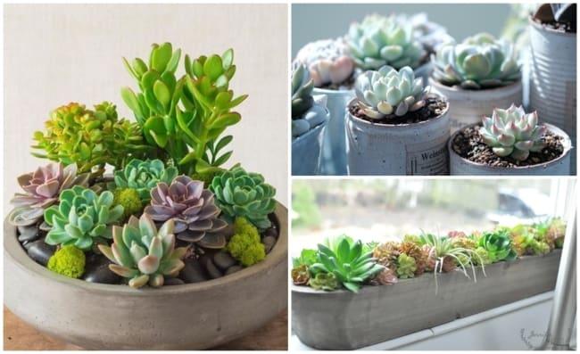 plantas de sol para vaso