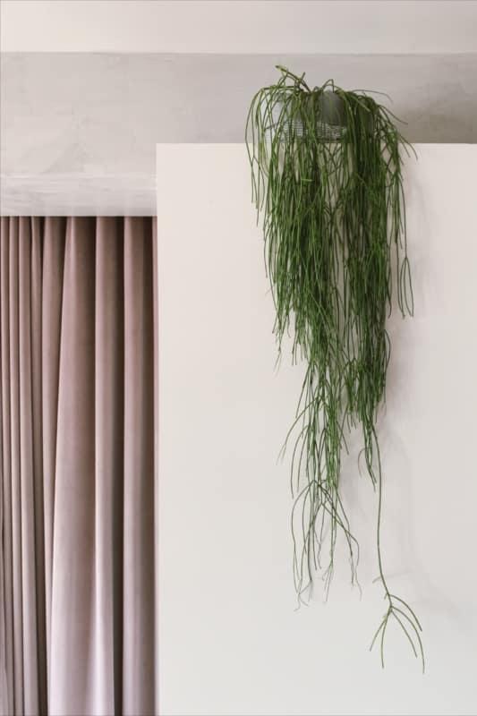 decoracao dentro de casa com planta pendente