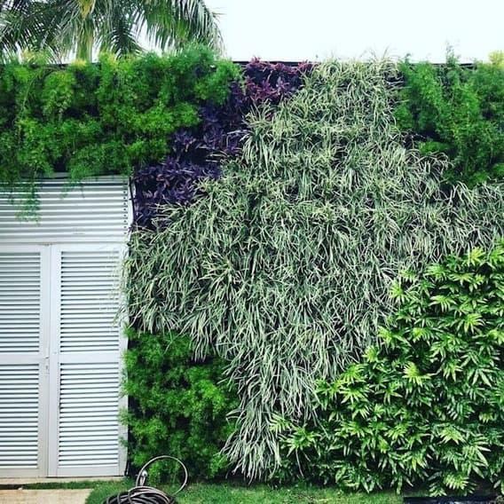 jardim vertical no sol com planta barba de serpente