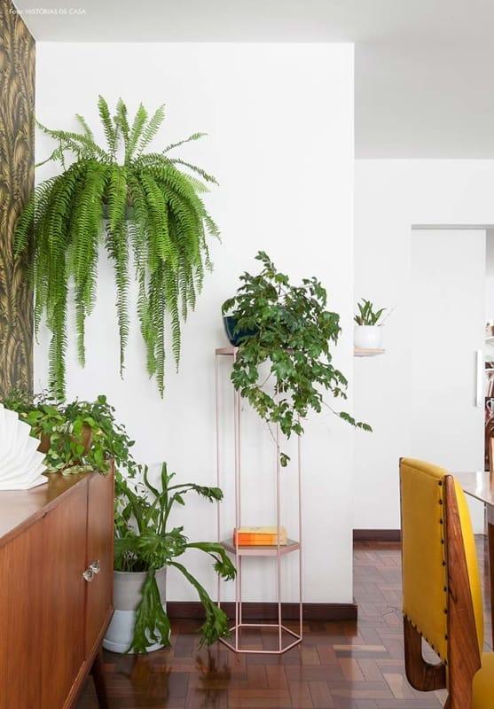 decoracao de interiores com samambaia