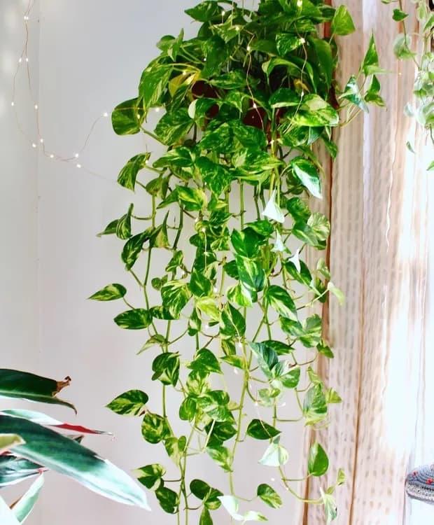 folhagem de sol para jardim vertical