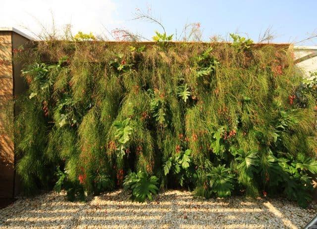 jardim vertical com planta de sol