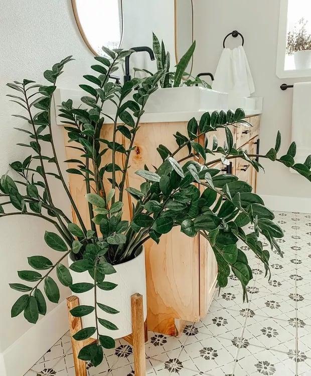 decoracao interna com vaso de planta