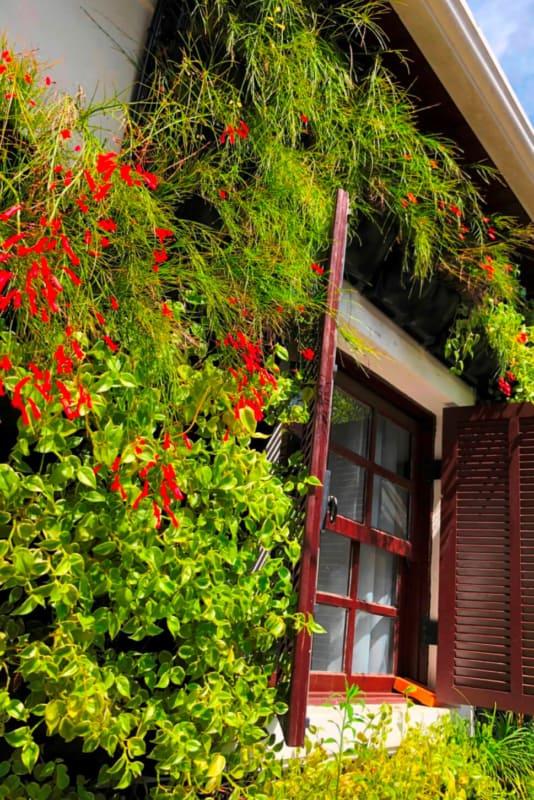 jardim vertical com flor coral