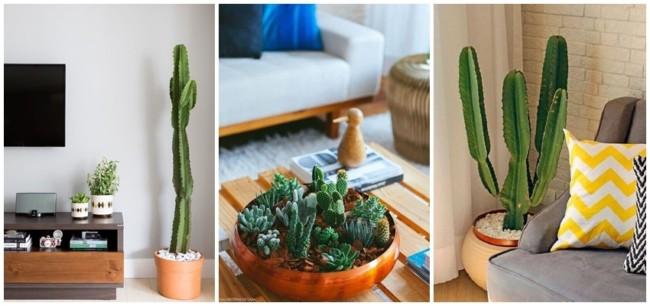 planta facil de cuidar para dentro de casa