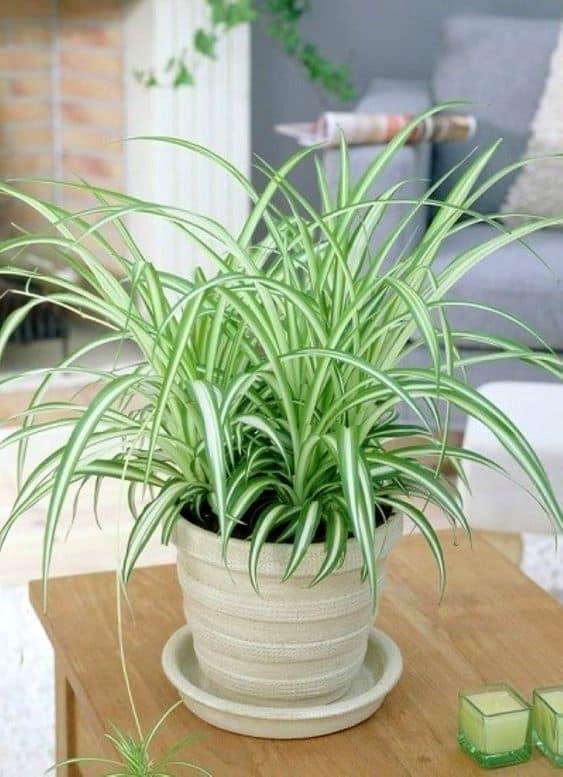 planta de vaso para interiores