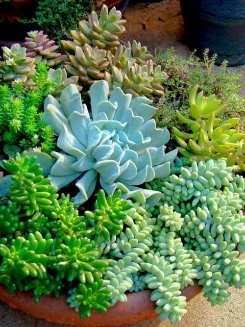 Jardim suculentas 20