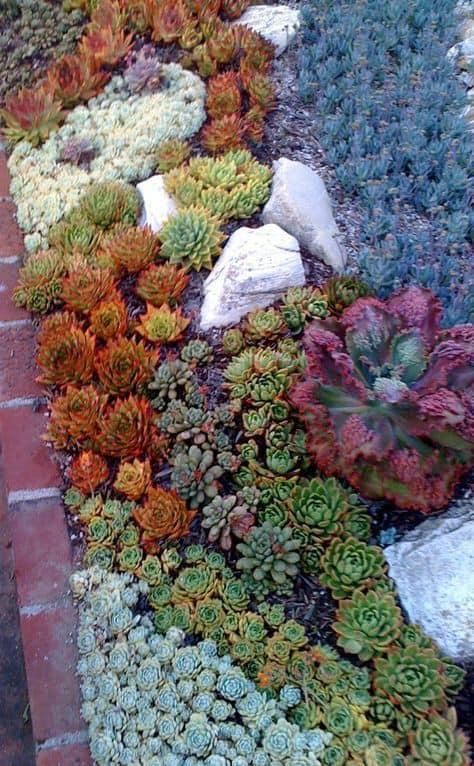 Suculentas jardim 35