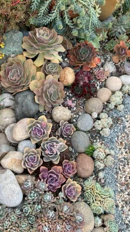 Suculentas jardim 37