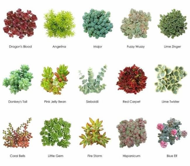 Suculentas jardim 48
