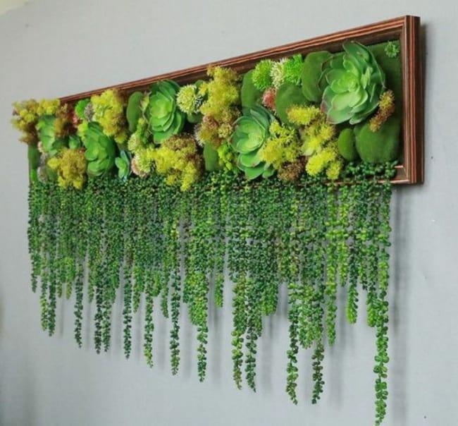 Suculentas jardim 54
