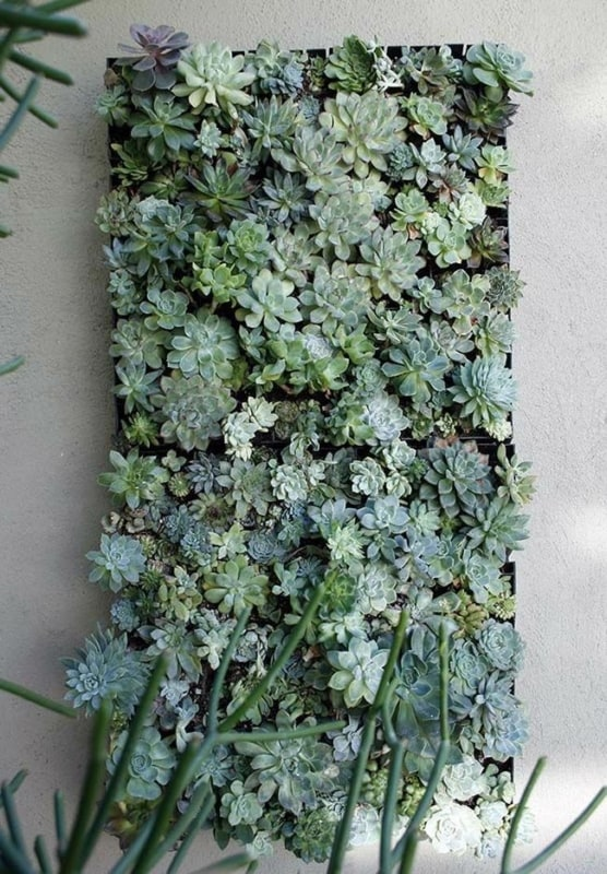 Suculentas jardim 55