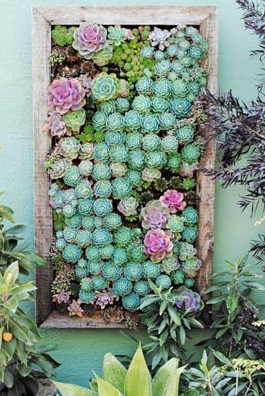 Suculentas jardim 56