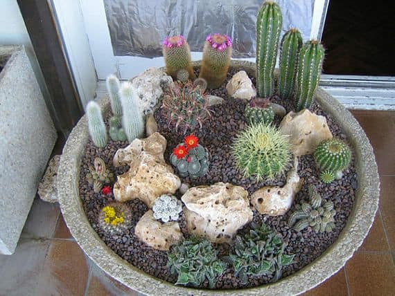 Suculentas jardim 65