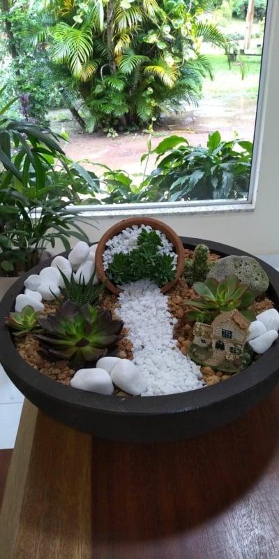 Suculentas jardim 72
