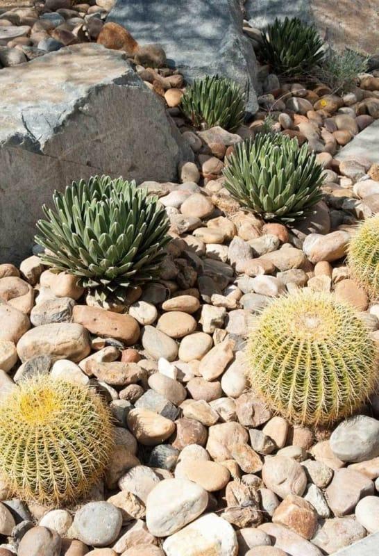 Suculentas jardim 73
